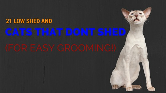 21 Low Shed And Cats That Don T Shed For Easy Grooming