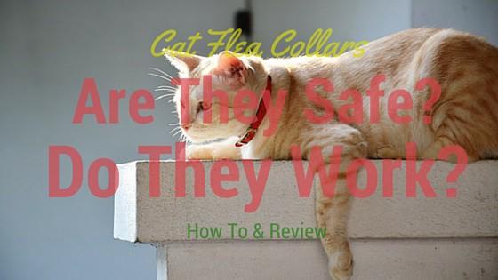 how to keep an outdoor cat away