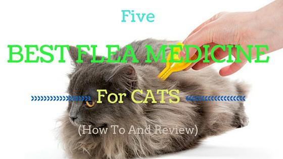 Flea Medicine Overdose Cats