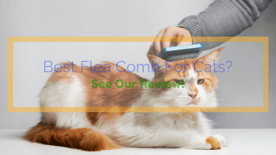 Best flea and tick prevention for cats uk