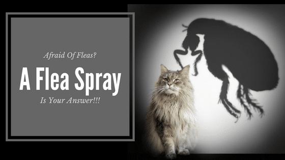 Best Natural Flea Killer For Cats