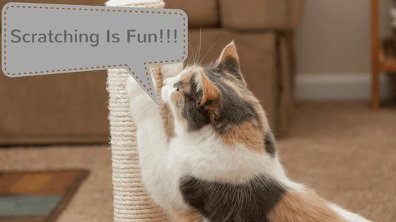 cat skin allergy treatment