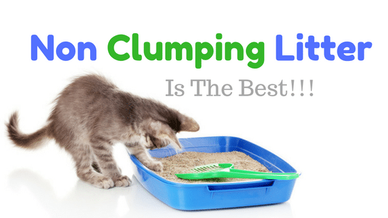 homemade cat urine carpet cleaner
